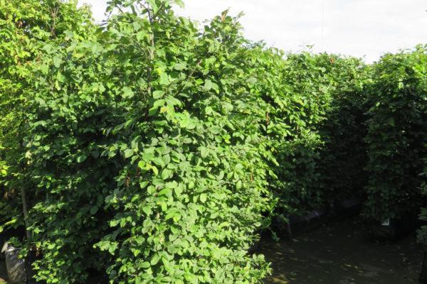 Instant hedging