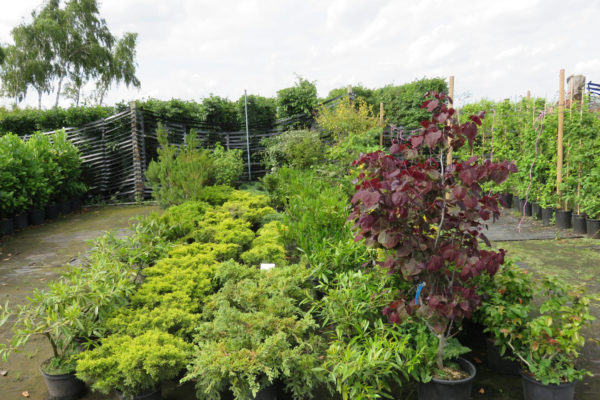 shrubs-cropped